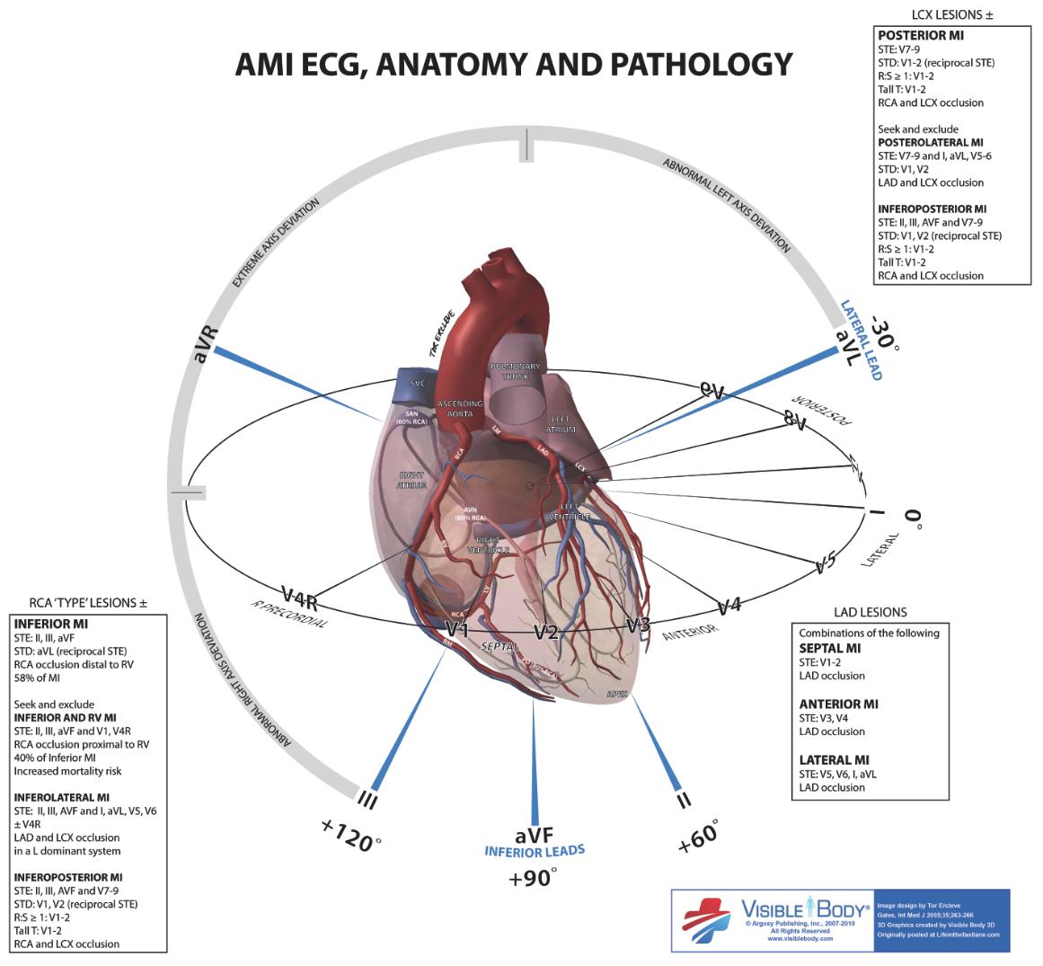 Axis Diagram Anatomy - Illustration Of Wiring Diagram •